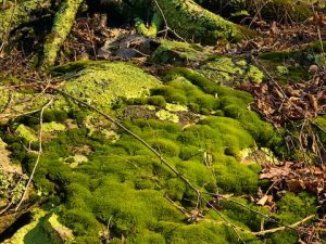 Moss (St. Patrick's Day Poem by Polly Castor)