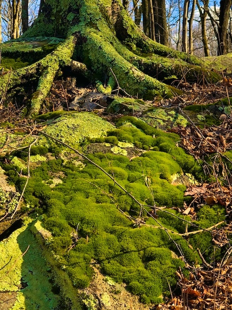 Moss poem by Polly Castor