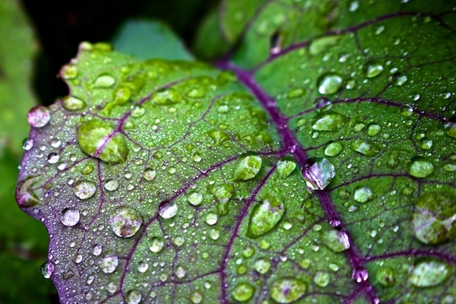 Wet Leaf Photos