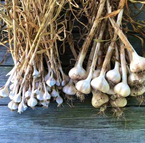 Parable of the garlic, parable of the compost pile