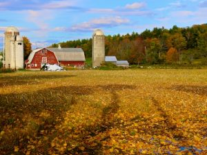 Roadside Vermont (Photos)