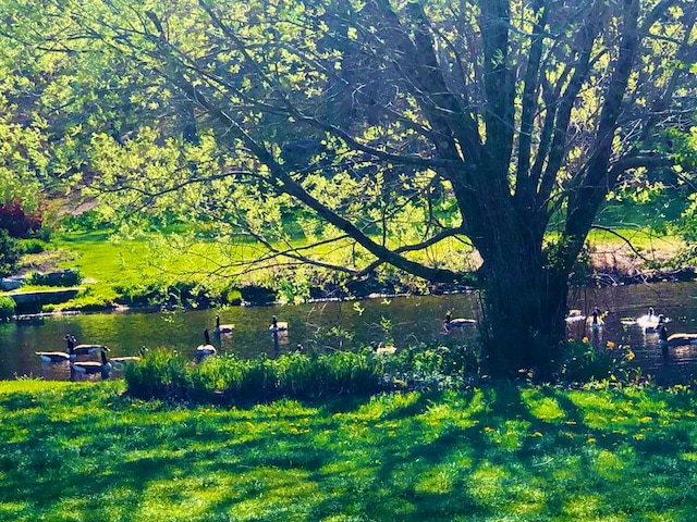 Spring at New Pond Farm Photos