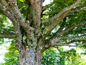 Turn People Into Trees (Ram Dass Quote)