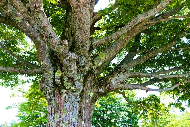 Think of People as Trees (Ram Dass Quote)