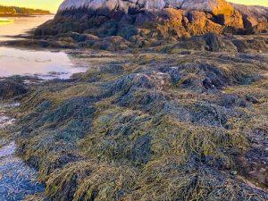Hendrick's Head Beach at the Golden Hour (Photos)