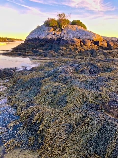 Hendrick's Head Beach at the Golden Hour Photos