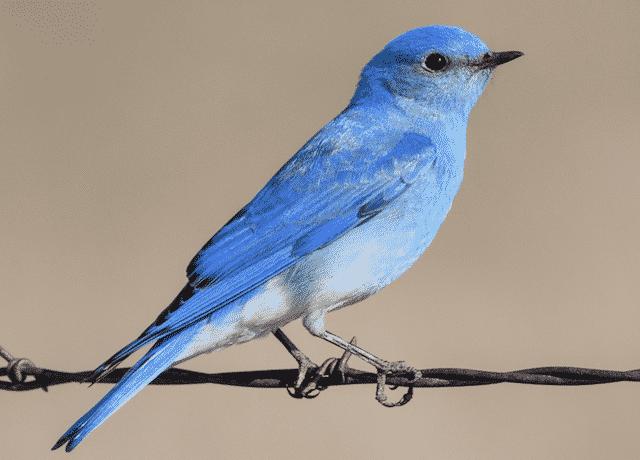 Birdwatching poem by Lynn Ungar
