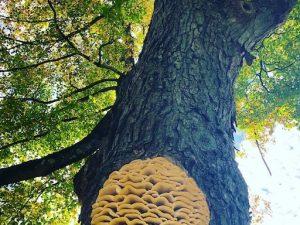 Amazing Mushroom Sighting