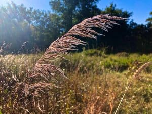 The Kama Sutra of Kindness (poem by Mary Mackey)